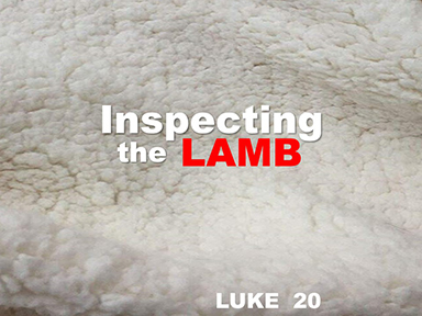 luke-20-inspecting-the-lamb